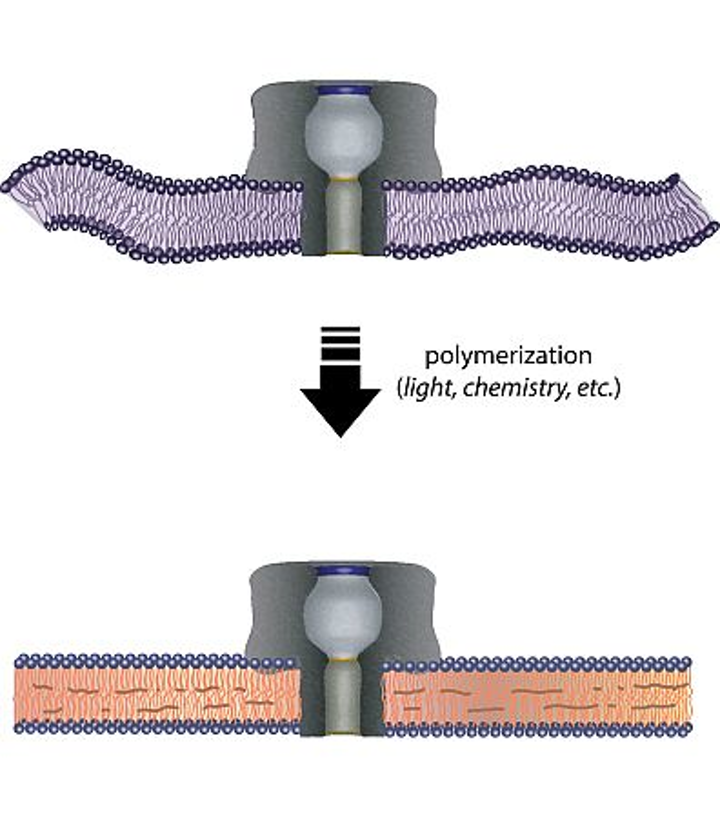 Polymers could prolong life of lab-on-a-chip technology