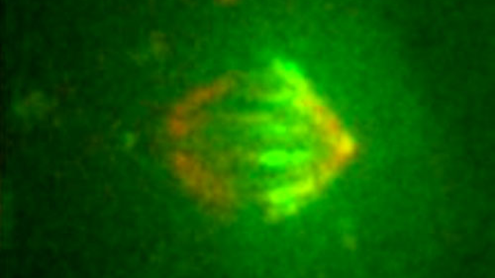 Content Dam Bow Online Articles 2014 07 Ncb Microtubul Ms Big