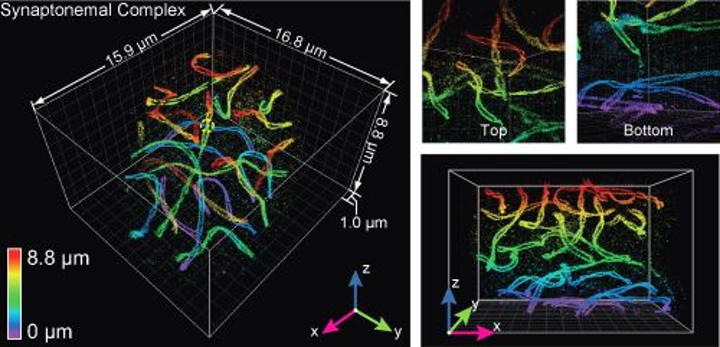 Adaptive optics enhances super-resolution microscopy for cell