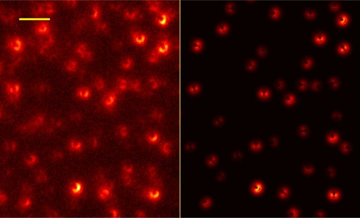 An image of single molecules on the graphene sheet is shown at left; such images allow scientists to determine the position and orientation for each molecule. Comparison with the expected image (right) shows excellent agreement.